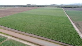 Rural / Farming commercial property for sale at Lot 11 Up River Road Proserpine QLD 4800