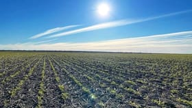 """Rural / Farming commercial property for sale at """"ROXBURGH"""" Walgett NSW 2832"""