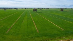 Rural / Farming commercial property for sale at Wakool Road Wakool NSW 2710