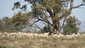 Rural / Farming commercial property for sale at 2261 Johnburgh Road Orroroo SA 5431