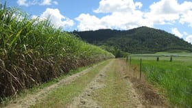 Rural / Farming commercial property for sale at Friday Pocket QLD 4855