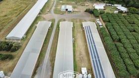 Rural / Farming commercial property for sale at 1004 Bilwon Road Biboohra QLD 4880