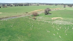Rural / Farming commercial property for sale at 146 Springfield Lane Tarcutta NSW 2652