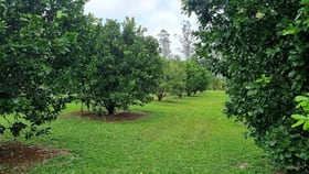 Rural / Farming commercial property for sale at 133 Daly Road Camp Creek QLD 4871