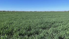 Rural / Farming commercial property for sale at 'Merriwee' 1262 Floddenfield Road Coonamble NSW 2829