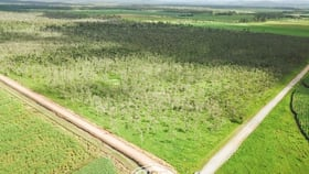 Rural / Farming commercial property for sale at 157 Peters Road Mareeba QLD 4880