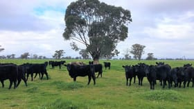 Rural / Farming commercial property for sale at . Schnaars Road Culcairn NSW 2660