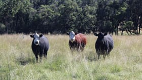 """Rural / Farming commercial property for sale at """" Rocky Glen"""" Moree NSW 2400"""