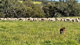Rural / Farming commercial property for sale at 1004 Northam-Toodyay Toodyay WA 6566