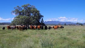 Rural / Farming commercial property for sale at 1387 Kaputar Road Narrabri NSW 2390