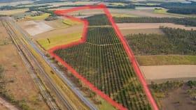 Rural / Farming commercial property for sale at 101 Harris Road Koumala QLD 4738