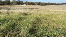 Rural / Farming commercial property for sale at The Springs 4194 Nullamanna Road Wellingrove NSW 2370
