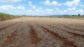 Rural / Farming commercial property for sale at Mourilyan QLD 4858