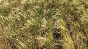 Rural / Farming commercial property for sale at 581 Drescher Road Borrika SA 5309