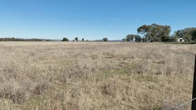 Rural / Farming commercial property for sale at 171 Black Lead Lane Gulgong NSW 2852