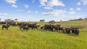 "Rural / Farming commercial property for sale at ""Merricroft""  44 Merricroft Road Goulburn NSW 2580"