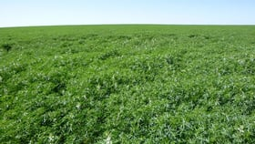 Rural / Farming commercial property for sale at Lot 10273 Moore Road West Casuarinas WA 6630