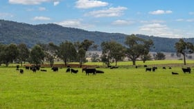 Rural / Farming commercial property for sale at 7458 Bylong Valley  Way Mudgee NSW 2850