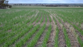 Rural / Farming commercial property for sale at . 'Edenhope' Tammin WA 6409