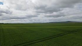 Rural / Farming commercial property for sale at * Mundoora Boundary Rd Mundoora SA 5555