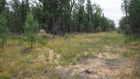 Rural / Farming commercial property for sale at 419 Killara Road Narrabri NSW 2390