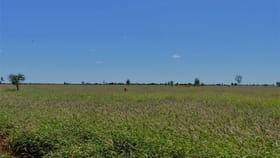 """Rural / Farming commercial property for sale at . 'Cashmere West"""" St George QLD 4487"""