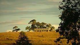 Rural / Farming commercial property for sale at 465 Ellangowan Myrtle Creek Road Ellangowan NSW 2470