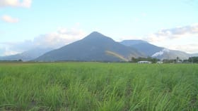 Rural / Farming commercial property for sale at Gordonvale QLD 4865