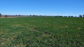 Rural / Farming commercial property for sale at Delungra NSW 2403