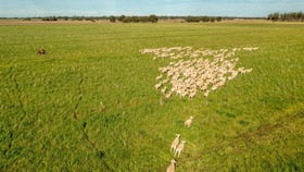 Rural / Farming commercial property for sale at Aggregation & Water Morley Road Coleambally NSW 2707