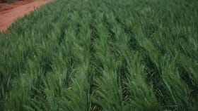 Rural / Farming commercial property for sale at 3810 Balla-Whelarra Road Binnu WA 6532
