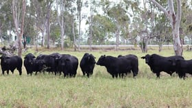 Rural / Farming commercial property for sale at 0 Capricorn Highway Fairy Bower QLD 4700