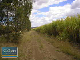 Rural / Farming commercial property for sale at * Freeman Road Clare QLD 4807