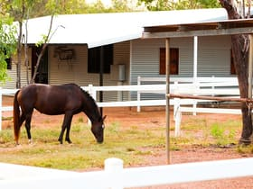 Rural / Farming commercial property for sale at 280 Ringwood Road Adelaide River NT 0846