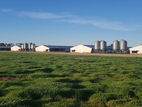Rural / Farming commercial property for sale at Dhillon Farm 48 Cawrse Road Mallala SA 5502