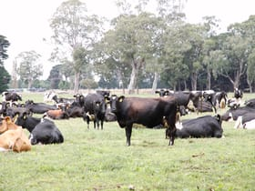 Rural / Farming commercial property for sale at 180 McLachlan Road Heyfield VIC 3858