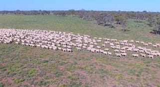 'trewilga & Punches Plain', Coonamble NSW 2829