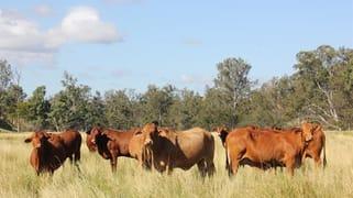 Tablelands Road Sheep Station Creek QLD 4515