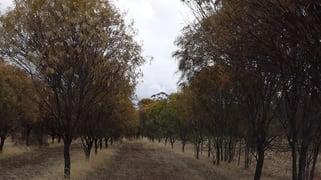 38 Avoca Road Morbinning WA 6304