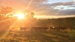 Boree, Oxley Highway Walcha NSW 2354