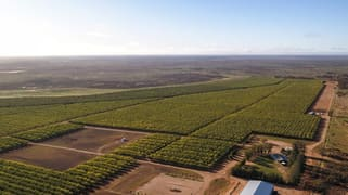 Jakad Almond Orchard 222 Papershell Avenue Lindsay Point VIC 3496
