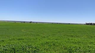 19943 Flinders Highway Talia SA 5670