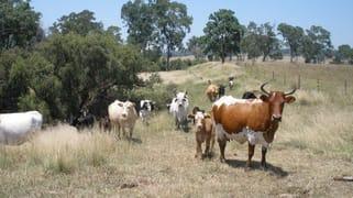 147 Toomeys Road Taabinga QLD 4610