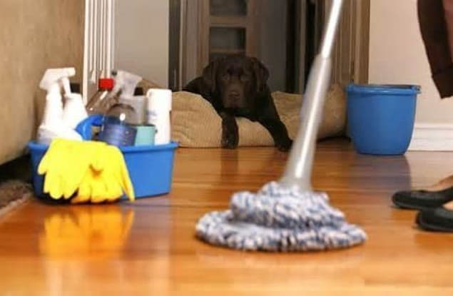 Cleaning Services business for sale in Box Hill - Image 1