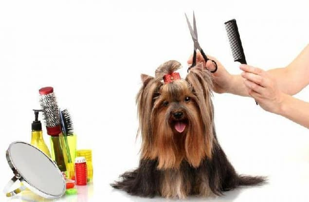 Animal Related business for sale in Preston - Image 1