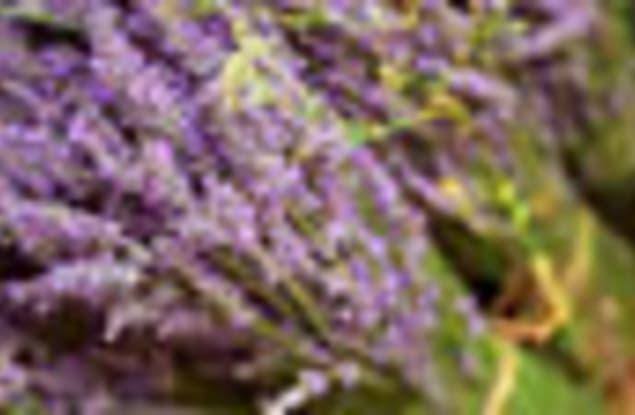 Florist / Nursery business for sale in Sydney - Image 1
