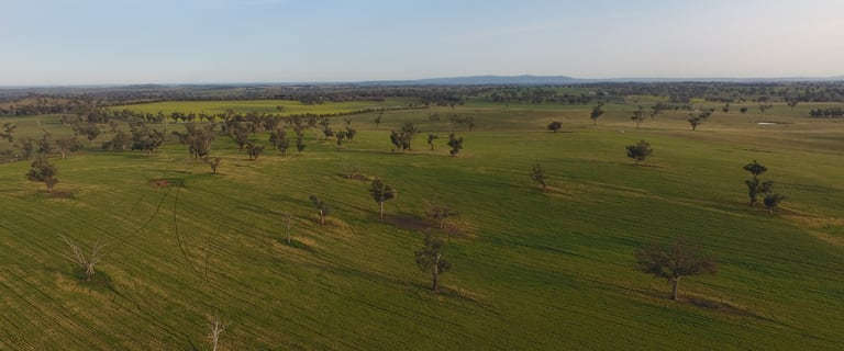 Rural / Farming commercial property for sale at Uplands, Memagong Lane Young NSW 2594