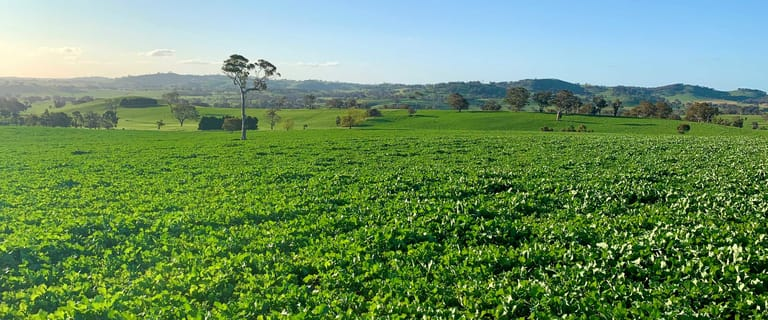 Rural / Farming commercial property for sale at 553 Coolalie Road Yass NSW 2582