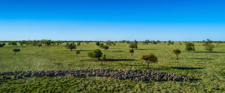 Rural / Farming commercial property for sale at 'Pollybrewan', 1858 Gungalman Road Carinda NSW 2831