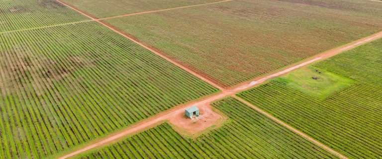 Rural / Farming commercial property for sale at Merbein VIC 3505